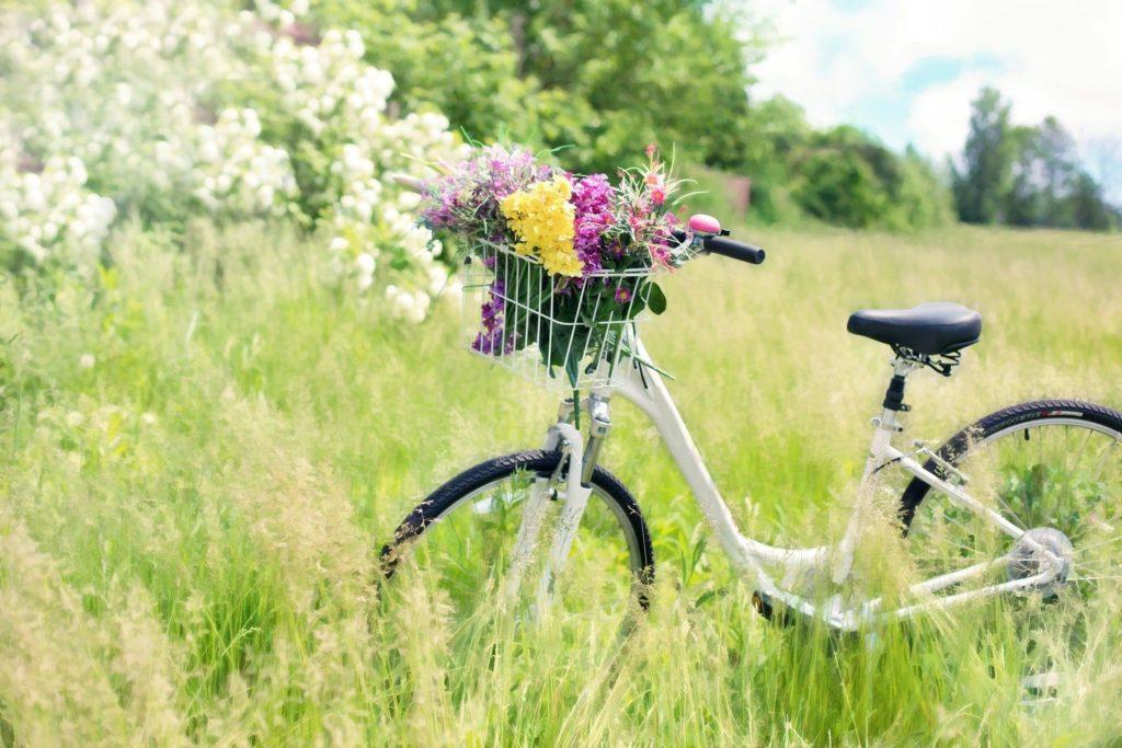 vélo ambiance champêtre, en connaitre un rayon, multipotentialité versus expertise