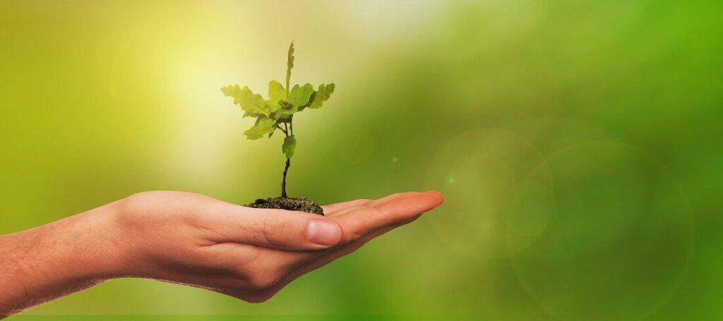 de quelle graine êtes vous, ikigaï, transition de vie