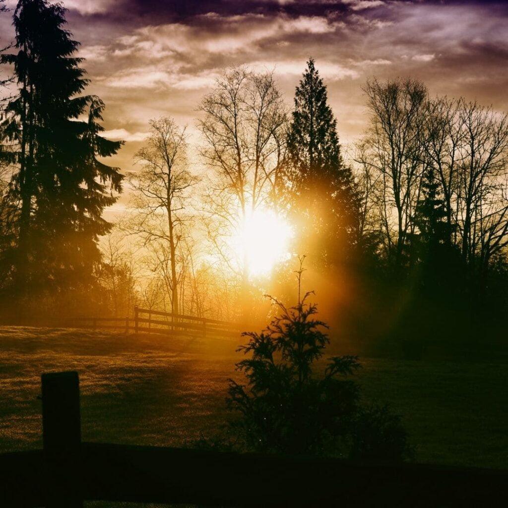 célébrer yule, solstice d'hiver, renaissance, lumière, transition de vie, vivre ma vraie nature