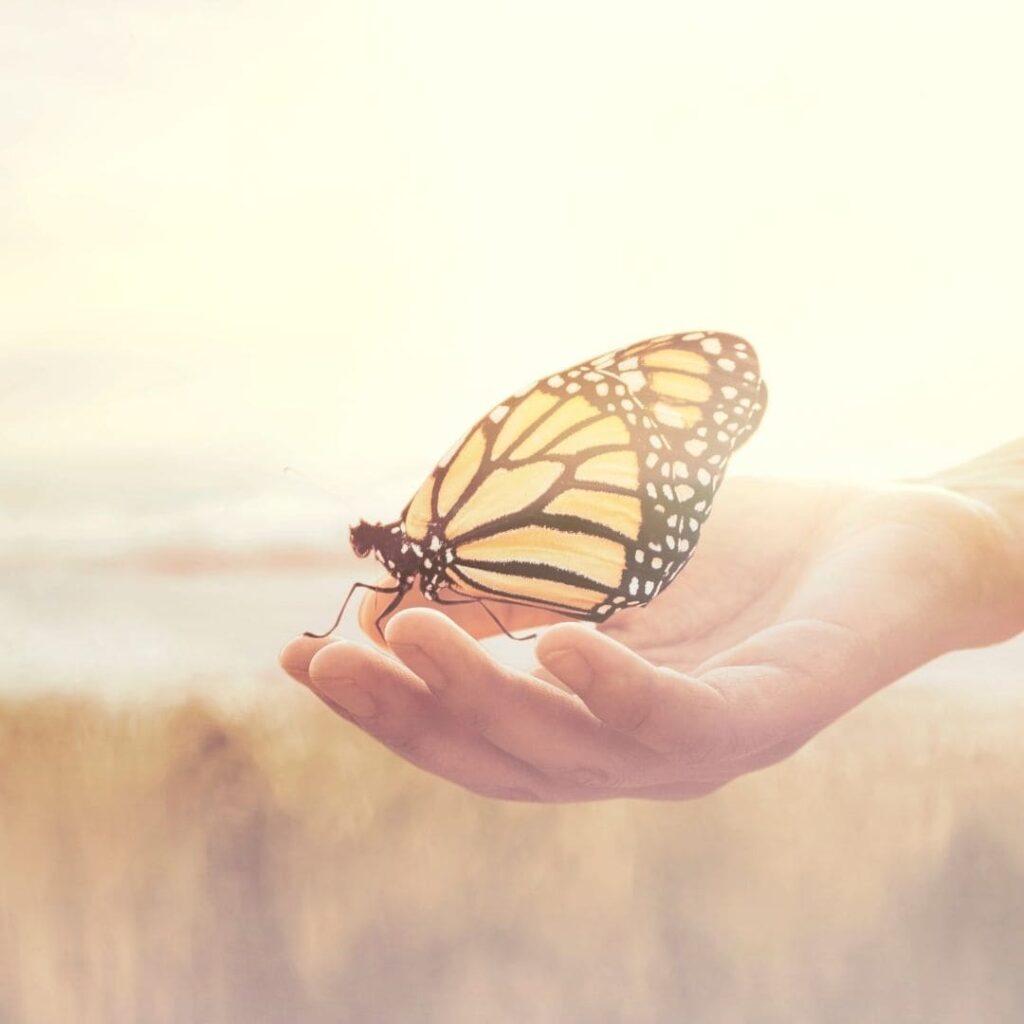 respect du vivant, valeurs, Schwartz, vivre ma vraie nature, ikigaï, transition de vie, changer de vie, alignement, identifiez vos valeurs